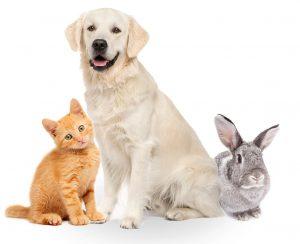 dezavantajele achizitionarii unui animal de companie